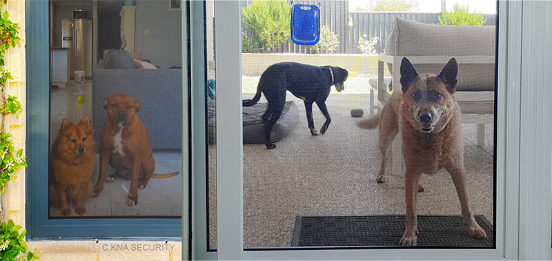 Dog proof doors screen
